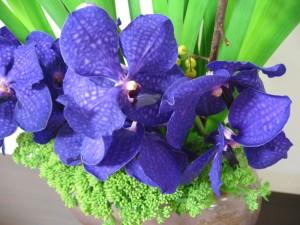20150917 今週のお花