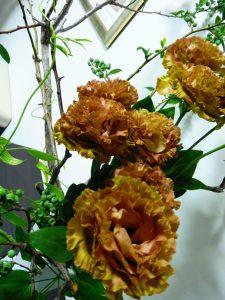 20160526 今週のお花